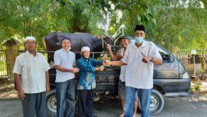 Pemkab Sintang Terima Bantuan 3 Ekor Hewan Qurban Dari Pemprov Kalbar