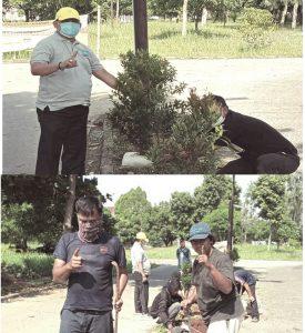 Tajudin Tabri Sosialisasikan Pilkada Dengan Cara Tanam 100 Pohon Pucuk Kuning